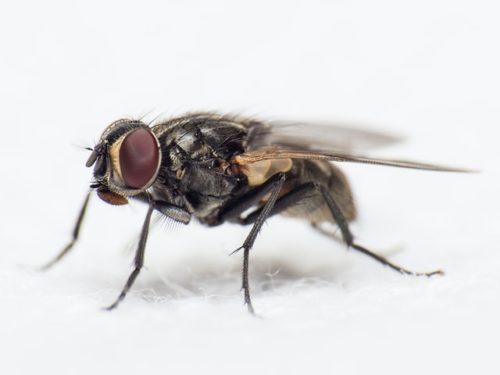 Cette mouche est un nudge